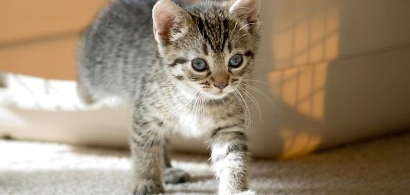 kitten leaving litter box