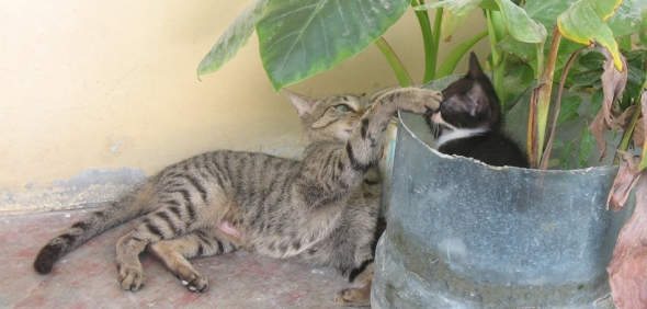 cat in plant